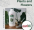OOMMI Natural Probiotic for Plants and Flowers Growth - 1L